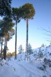Glencharnoch Woods